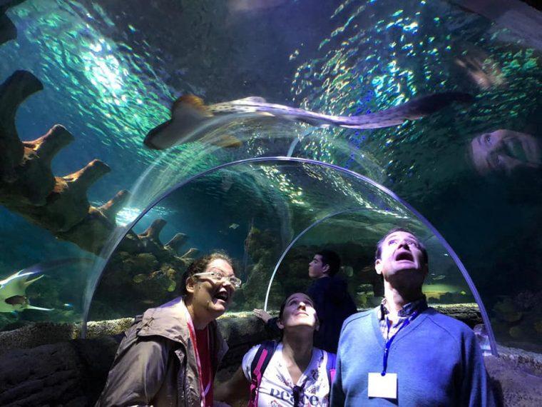 Visita a Sea Life y comida en Mc Donald